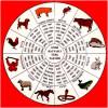 Celali Takvimin 12 Hayvanlı Türk Takvimi ile Benzer ve Farklı Yönleri Nelerdir ?