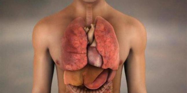 Vücudumuzda Yeni Organlar Geliştirebileceğiz